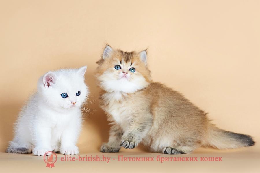 как выбрать котенка, какого котенка выбрать, как выбрать правильно котенка, британские котята как выбрать, как выбрать здорового котенка, как выбрать котенка для дома, как правильно выбрать британского котенка, как выбрать котенка видео, как выбрать породу котенка, какой породы выбрать котенка, какого котенка выбрать для ребенка, как выбрать котенка британца, как выбрать породистого котенка, как выбрать умного котенка, как выбрать кота, какого кота выбрать, кот или кошка кого выбрать, как правильно выбрать кота, как выбрать кота для дома, какую породу кота выбрать, как выбрать кошку, какую кошку выбрать, какую породу кошек выбрать, выбрать для ребенка породу кошки, как правильно выбрать кошку, как выбрать кошки породу, как выбрать кошку тест, как выбрать кошку для дома, тест как выбрать породу кошки, какую кошку выбрать тест, какую выбрать кошку для дома, какую породу кошек выбрать тест, британская кошка как выбрать, какого цвета выбрать кошку, как выбрать кошку для ребенка, как выбрать кошку по характеру
