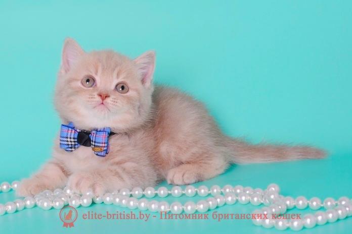 британская кошка фавн, британский кот фавн, британцы фавн, окрас фавн британских кошек, британская кошка фавн, британский кот фавн, британцы фавн, окрас фавн британских кошек, британская шиншилла кошка цена, британская кошка цена, британские котята цена, британский кот цена, британская короткошерстная кошка цена, кот британец цена, британская вислоухая кошка цена, британский вислоухий кот цена, котенок британец цена, британская вислоухая кошка фото цена, британский вислоухий котенок цена, сколько стоит британский котенок, сколько стоит британская кошка, сколько стоит британский кот, сколько стоит котенок британец, сколько стоит британский вислоухий котенок, сколько стоит кот британец, сколько стоит котенок британской породы, сколько стоит британская короткошерстная кошка, сколько стоит британская вислоухая кошка, сколько стоит котенок британец вислоухий, сколько стоит британский вислоухий кот, сколько стоит кошка британской породы, сколько стоит котенок британской кошки, сколько стоит британская кошка в рублях, сколько стоит британский котенок цена, сколько стоит британский котенок цена в рублях, сколько стоит британская шиншилла кошка, сколько стоит котенок британской шиншиллы, сколько стоит британский котенок с документами, сколько стоит кот британской породы, сколько стоит британский кот цена
