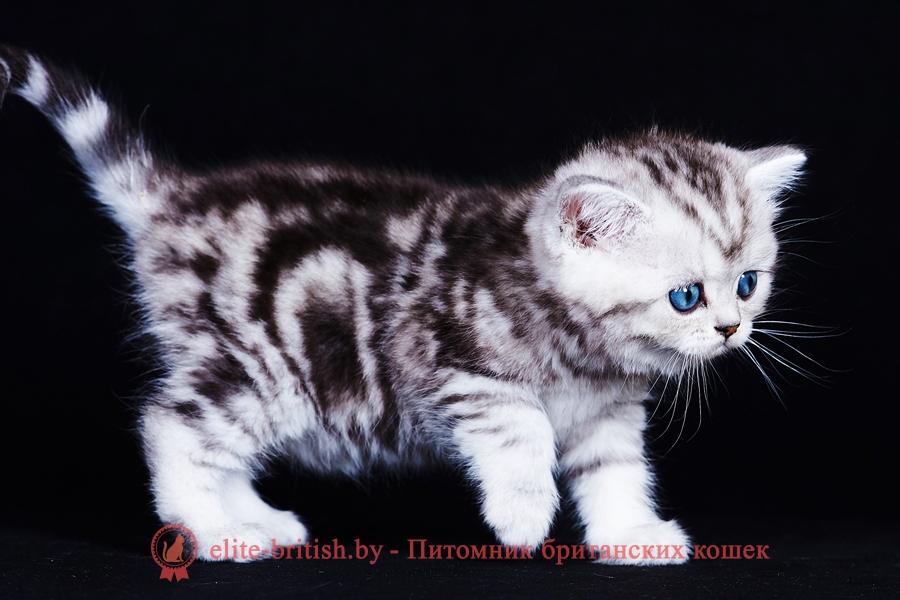 британские котята стоимость британец кот стоимость британец стоимость британская кошка фото стоимость стоимость британских кошек котята британцы стоимость стоимость британских котов сколько стоит котенок британец британский кот сколько стоит сколько стоит британец сколько стоит британская кошка сколько стоит британский котенок цена сколько стоит кот британец сколько стоит голубой британец сколько стоит котенок британский короткошерстный британский кот цена британская кошка цена в беларуси британские котята цена в минске британская голубая кошка фото цена британский короткошерстный кот цена голубой британец цена голубые британцы цена британец цена британская кошка фото цена британские голубые котята цена кот британец голубой цена купить британца котенка цена британец шиншилла фото цена котята британцы фото и цена британец фото цена британские коты фото цена цена британцев котят британский голубой кот цена голубые британские коты цена кот британской породы цена короткошерстный британец цена британская короткошерстная кошка фото цена британские котята цена питомник котята британской породы фото цена кошки британцы цена британец белый цена британские кошки окрасы цена британские кошки цена москва золотые британские котята цена кот британская шиншилла цена котята британской шиншиллы цена кошки британской породы фото цены порода котов британец цена порода кошек британец фото цена британские золотые шиншиллы котята цена британские лиловые котята цена золотой британец цена кот британская шиншилла цена котята британской шиншиллы цена британские вислоухие котята фото лиловые котята британцы лиловые фото британский кот лилового окраса британский вислоухий кот