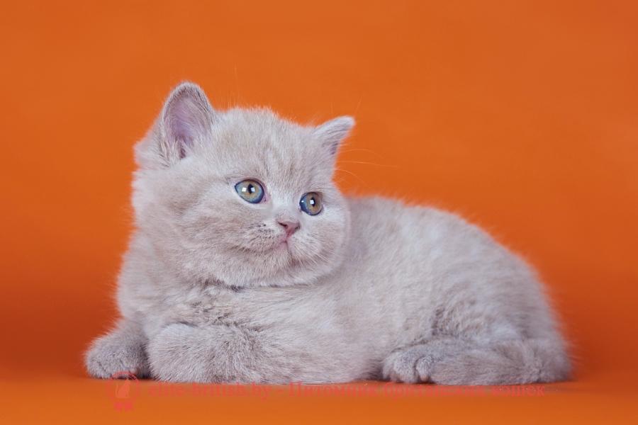 британская шиншилла кошка цена, британская кошка цена, британские котята цена, британский кот цена, британская короткошерстная кошка цена, кот британец цена, британская вислоухая кошка цена, британский вислоухий кот цена, котенок британец цена, британская вислоухая кошка фото цена, британский вислоухий котенок цена, сколько стоит британский котенок, сколько стоит британская кошка, сколько стоит британский кот, сколько стоит котенок британец, сколько стоит британский вислоухий котенок, сколько стоит кот британец, сколько стоит котенок британской породы, сколько стоит британская короткошерстная кошка, сколько стоит британская вислоухая кошка, сколько стоит котенок британец вислоухий, сколько стоит британский вислоухий кот, сколько стоит кошка британской породы, сколько стоит котенок британской кошки, сколько стоит британская кошка в рублях, сколько стоит британский котенок цена, сколько стоит британский котенок цена в рублях, сколько стоит британская шиншилла кошка, сколько стоит котенок британской шиншиллы, сколько стоит британский котенок с документами, сколько стоит кот британской породы, сколько стоит британский кот цена