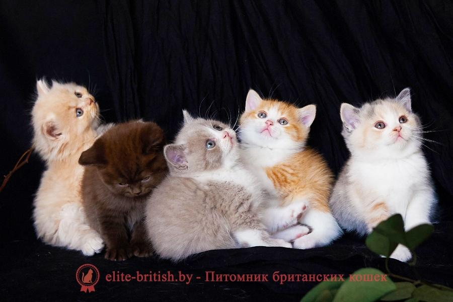 корм для британских кошек, корм для британских котят, лучший корм для британских кошек, корм для котят британцев, корм для кошек британцев, какой корм лучше для британских котят, какой корм лучше для котят британцев, сухой корм для британских кошек, корм для британских кошек роял канин, лучший корм для британских котят, сухой корм для британских котят, корм для британских кошек премиум класса, корм для британских котят премиум класса, какой корм лучше для британских кошек, корм роял канин для британских котят, корм для британских котов, корм для кошек британской породы, какой корм лучше для кошек британской породы, корм для кота британца, корм для кастрированных британских котов, сухой корм роял канин для британских кошек, какой корм лучше для британских котов, корм роял канин для британских короткошерстных кошек, корм для британских длинношерстных кошек, корм для британских кошек отзывы ветеринаров, лучший корм для британских кастрированных котов, какой корм подходит для британской кошки, корм для британских короткошерстных кошек, корм роял канин для британской короткошерстной, корм роял канин для котят британцев, лучший корм для британских котов, самый лучший корм для британских кошек, хороший сухой корм для британских кошек, премиум корма для британских кошек, сухой корм для кошек британской породы, какой корм лучше для кота британца