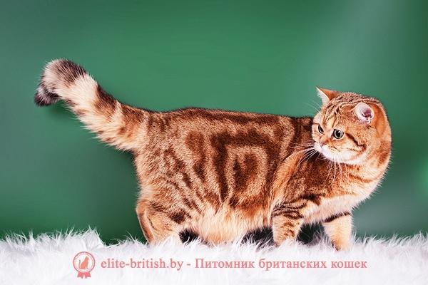 фото британских котят табби, британские котята табби, британские кошки табби, окрасы британских кошек табби, короткошерстная британская кошка серебристый табби, британские коты табби фото, британские котята окраса табби, табби британец, табби британец фото, британец окрас табби, британцы серебристый табби, британская короткошерстная кошка табби, британская кошка табби фото, британская кошка серебристый табби, британская кошка окрас табби фото, британские коты табби, британские котята браун табби, британские котята табби купить, британец табби тигровый, британские котята, британский кот, британская кошка, британец кот, британцы, котята британцы, британец порода кошки, коты породы британец, кошки британской породы, коты британской породы, британцы кошки, котенок британской породы, котики британцы, котята от британской кошки, котенки британцы, кошечки британцы, котята британского кота, британская кошка и кот, кошки котята британцы, британцы коты и кошки, британский породистый кот, британские котята фото, британская кошка фото, британский кот фото, британец кот фото, британцы котята фото, британцы фото, британская короткошерстная кошка фото, британский короткошерстный кот фото, кошки британцы фото, котята британские короткошерстные фото, фото котов британской породы, фото кошек порода британская, коты породы британец фото, коты британцы фото цены, котик британец фото, британец короткошерстный фото, котята британской породы фото, британские коты фотографии, фото британских кошек смотреть, фото британских котят и кошек, взрослые британские коты фото, британский гладкошерстный кот фото, британские котята маленькие фото, взрослые коты британцы фото, фото маленьких котят британцев, фотографии британских кошек, фото британских котов и кошек, британская гладкошерстная кошка фото, порода британец фото, порода кошек британец фото, фотографии котов британцев, фото котов британцев короткошерстных, порода кошек британская короткошерстная фото, смотреть фото британских котов, фотогр