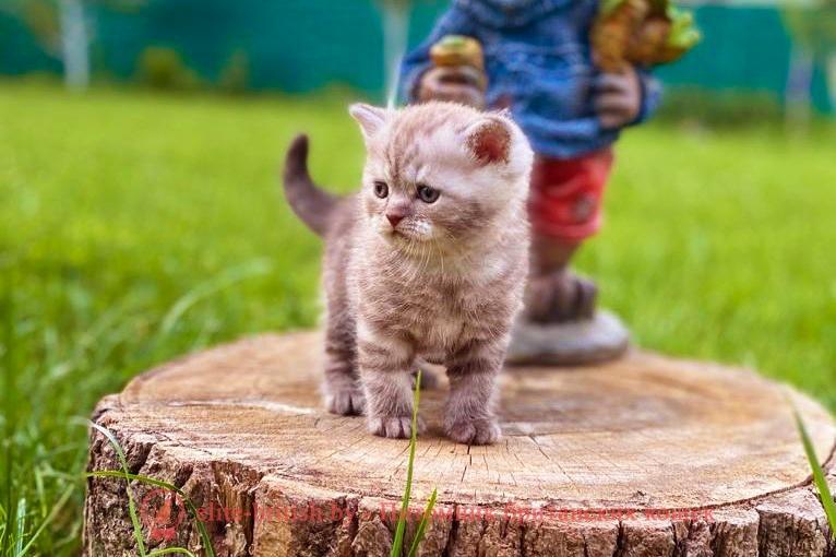 британские кошки дымчатые, дымчатые британцы, британский дымчатый кот, британская кошка дымчатого окраса, британец дымчатый фото, британцы окраса вискас, британцы вискас фото, котенок британец вискас, британец вискасного окраса, британская кошка вискас, окрас вискас британских кошек, британская кошка фото вискас, британская кошка окрас вискас фото, британские котята вискас купить, британские котята цвета вискас, вислоухий британец вискас, британец окрас вискас фото, британский кот вискас, британский котенок вискас, британские котята окрас вискас купить, британец вискас купить, британец кот вискас, вискасный британец, коты британцы вискас фото, британцы цвета вискас