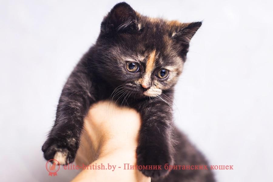 британская шиншилла кошка цена, британская кошка цена, британские котята цена, британский кот цена, британская короткошерстная кошка цена, кот британец цена, британская вислоухая кошка цена, британский вислоухий кот цена, котенок британец цена, британская вислоухая кошка фото цена, британский вислоухий котенок цена, сколько стоит британский котенок, сколько стоит британская кошка, сколько стоит британский кот, сколько стоит котенок британец, сколько стоит британский вислоухий котенок, сколько стоит кот британец, сколько стоит котенок британской породы, сколько стоит британская короткошерстная кошка, сколько стоит британская вислоухая кошка, сколько стоит котенок британец вислоухий, сколько стоит британский вислоухий кот, сколько стоит кошка британской породы, сколько стоит котенок британской кошки, сколько стоит британская кошка в рублях, сколько стоит британский котенок цена, сколько стоит британский котенок цена в рублях, сколько стоит британская шиншилла кошка, сколько стоит котенок британской шиншиллы, сколько стоит британский котенок с документами, сколько стоит кот британской породы, сколько стоит британский кот цена, британские котята белого окраса, британец белый цена британец котенок белый белые британцы котята белые британцы цена кот британец черно белый купить британца в белгороде кот британец фото белый
