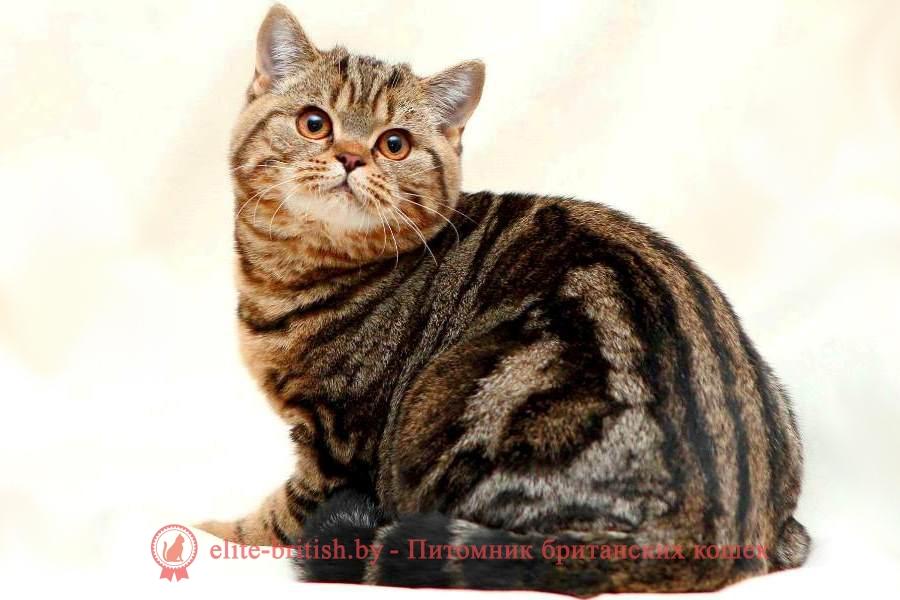 британский кот мраморный, мраморный британец, мраморный окрас британских котят, британский кот мраморного окраса, мраморный окрас британской кошки, британец мраморного окраса, котята британцы мраморный окрас, мраморный окрас британских котят, черный мраморный британец, британская мраморная кошка характер, британский кот мраморного окраса, британец черный мраморный, британец черный мрамор, красный мраморный британец, британская мраморная кошка, мраморный окрас британской кошки, британские кошки черный мрамор, мраморная британская короткошерстная кошка, британские кошки мрамор на серебре, британский кот черный мрамор, британский кот мраморный черный, британский мраморный котенок, британские котята мрамор, британские котята черные мраморные, британский котенок черный мрамор, британец мрамор, британец черный мрамор, британец мраморный кот, британец мраморного окраса, черный мраморный британец, черный мрамор британцы, мраморный вислоухий британец, котята британцы мраморный окрас, мраморные британцы котята, британские котята мраморного окраса фото, мраморный британец фото, мраморная британская кошка фото, британские кошки мраморного окраса фото, британские коты мраморные фото, британские котята фото мраморные, британцы черный мрамор фото, кот британец фото мраморный, британцы мраморный окрас фото