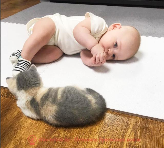 котенок в доме, котенок в новом доме, новый котенок в доме, котенок первый день дома, пришел котенок в дом, котенок в доме первые дни, принесли котенка в дом, в доме появился котенок, маленький котенок в доме, котенок и ребенок в доме, адаптация котенка в новом доме, появление котенка в доме, маленький котенок в доме уход, поведение котенка в новом доме, переезд котенка в новый дом, первый раз котенок в доме, котенок первый день дома, котенок в доме первые дни, первый раз котенок в доме, котенок в квартире