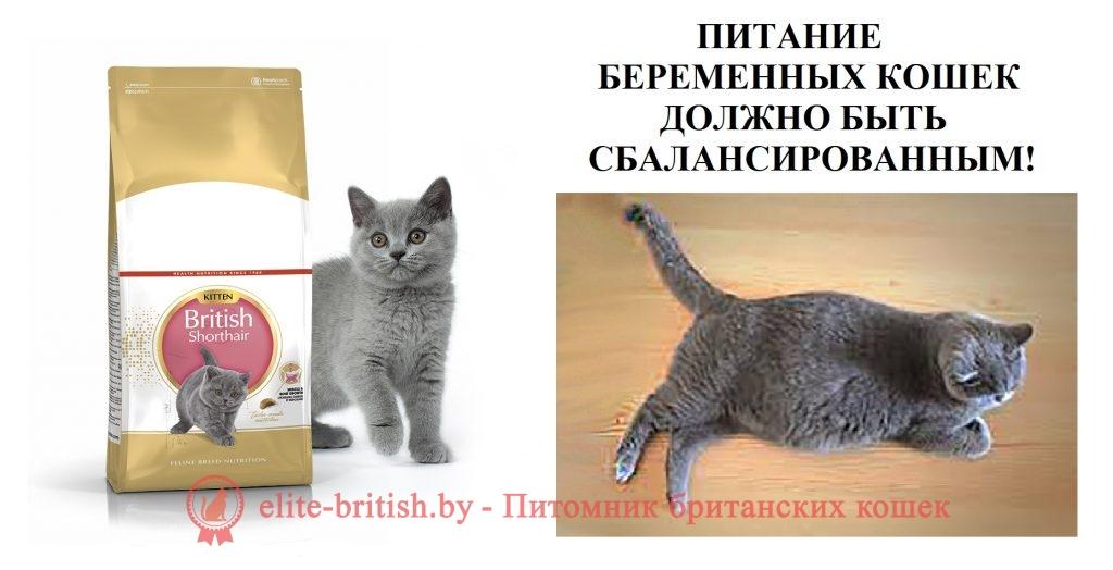 сколько ходят беременные кошки британские, сколько длится беременность у кошек британской породы, беременность британской кошки, сколько длится беременность у кошек британской, сколько ходят беременные кошки британские вислоухие, сколько кошки ходят беременные первый раз британские, срок беременности у кошек британских, чем кормить беременную кошку британскую, сколько ходят британские беременные кошки месяцев, сколько дней ходит беременная кошка британская, срок беременности у кошек британских вислоухих, калькулятор беременности кошек британских, беременная британская кошка, сколько ходит беременная кошка британская первые роды, сколько длится беременность у кошек британской вислоухой, сколько носят кошки беременность британские, сколько ходят беременные кошки британские прямоухие впервые, сколько ходят кошки беременные британцы, сколько ходят беременные кошки британские прямоухие, продолжительность беременности у кошек британских, длительность беременности у кошек британских, календарь беременности у британских кошек, беременность и роды британской кошки, беременность британской кошки по неделям, первая беременность у британской кошки, беременность у кошки британской породы, сколько дней ходит беременная кошка британская вислоухая, сколько дней длится беременность у британской кошки, беременность и роды у кошек британской породы, срок беременности у кошек британских прямоухих, беременность кошки сколько длится британец, признаки беременности британских кошек, сколько кошки ходят беременные британские голубые, 68 дней беременности британская кошка не рожает, сколько проходит беременность у кошек британской породы, какой срок беременности у кошек британской породы, сколько беременность у кошек британской породы, сколько ходит беременная кошка британская вторые роды, беременность британской вислоухой кошки, какой срок беременности у кошек британской, как понять беременна ли кошка британская, британцы кошки вислоухие фото беременна, первые признаки беременности у кошек