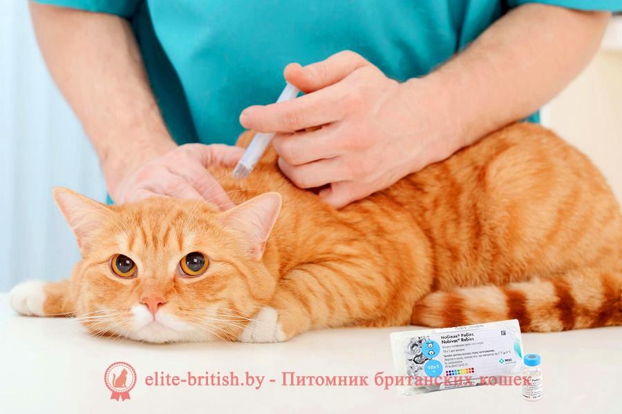 прививки котятам когда котятам делать прививки какие прививки котятам какие прививки делают котятам первая прививка котенку первые прививки для котят когда прививать котенка прививки британским котятам вакцинация котят котенок после прививки когда нужно делать прививки котятам прививки котятам возраст какие прививки нужны котенку прививки шотландским котятам когда делать первую прививку котенку когда котятам делают первые прививки делать ли прививки котенку когда ставить котенку прививки прививка котенку в 2 месяца прививка котенку от бешенства какие прививки нужно делать котенку прививки вислоухим котятам во сколько котятам делают прививки когда делать прививки британским котятам когда можно делать прививки котятам прививка котенку в 3 месяца когда надо делать прививки котенку прививки котятам шотландцам прививки котятам британцам нужны ли прививки котятам прививки для котят шотландских вислоухих когда делать прививки шотландскому котенку какие прививки сделать котенку во сколько прививать котенка прививки от глистов котятам какие прививки надо делать котенку какие прививки делают британским котятам нужно ли делать прививки котятам когда можно прививать котенка какие прививки ставят котятам график прививок для котят какие первые прививки делают котятам какую первую прививку делать котенку в каком возрасте прививают котят когда нужно прививать котенка вторая прививка котенку прививки котятам сфинксам когда делать прививку котенку британцу прививки котятам сроки когда делать прививку котенку шотландцу обязательно ли делать прививки котятам необходимые прививки для котят нужно ли прививать котенка