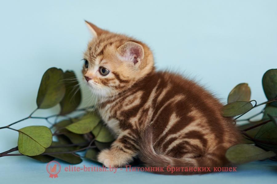 тигровая британская кошка, британец тигровый, британец табби тигровый, тигровый британский котенок, британский котенок тигрового окраса, британская тигровая кошка фото, тигровые британские котята фото, британский кот мраморный, мраморный британец, мраморный окрас британских котят, британский кот мраморного окраса, мраморный окрас британской кошки, британец мраморного окраса, котята британцы мраморный окрас, мраморный окрас британских котят, серебристый мраморный британец, британская мраморная кошка характер, британский кот мраморного окраса, британец голубой мрамор, британец черный мрамор на серебре, красный мраморный британец, британская мраморная кошка, мраморный окрас британской кошки, британские кошки черный мрамор, мраморная британская короткошерстная кошка, британские кошки мрамор на серебре, британский кот черный мрамор, британский кот мрамор на серебре, британский мраморный котенок, британские котята мрамор, британские котята мрамор на серебре, британский котенок черный мрамор, британец мрамор, британец