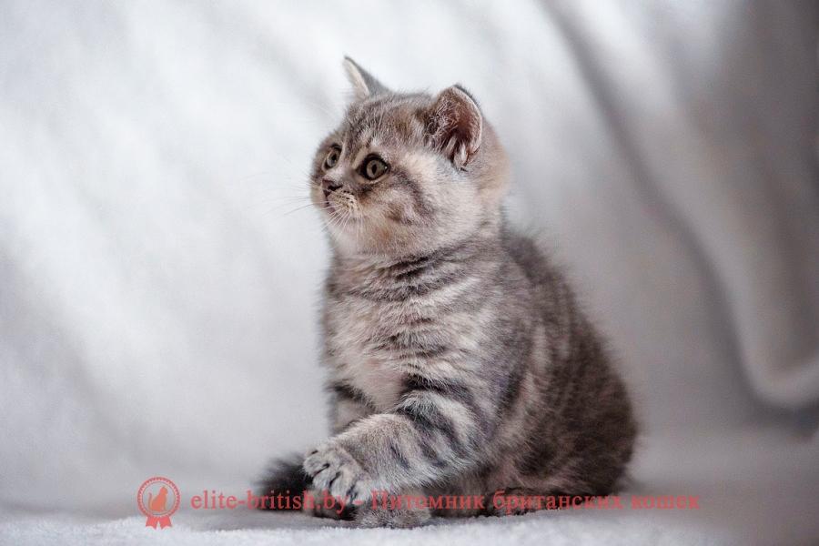 британский кот мраморный, мраморный британец, мраморный окрас британских котят, британский кот мраморного окраса, мраморный окрас британской кошки, британец мраморного окраса, котята британцы мраморный окрас, мраморный окрас британских котят, серебристый мраморный британец, британская мраморная кошка характер, британский кот мраморного окраса, британец голубой мрамор, британец черный мрамор на серебре, купить британского котенка, купить британца, британец голубой фото, голубые британцы фото, британский кошки голубой, британская голубая кошка, британская голубая кошка фото, британской голубой кошки фото, кот британский голубой, коты британские голубые, голубые британские котята фото, британский голубой котенок фото, британский голубой кот фото, фото британского голубого кота, окрас британских котят голубой фото, британские котята голубого окраса фото, британцы коты фото голубые,