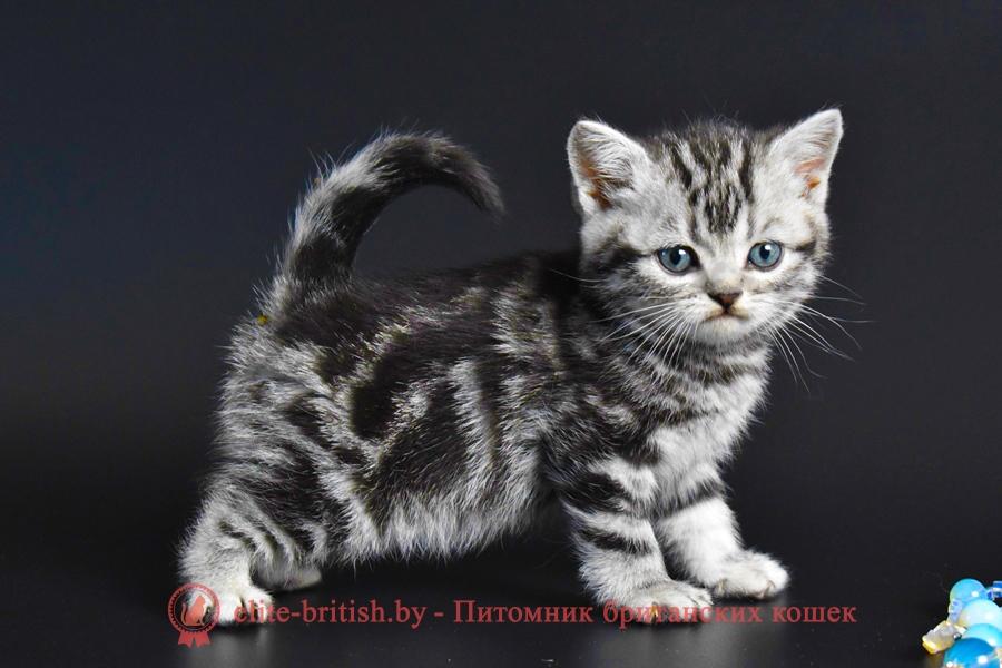 британский кот мраморный, мраморный британец, мраморный окрас британских котят, британский кот мраморного окраса, мраморный окрас британской кошки, британец мраморного окраса, котята британцы мраморный окрас, мраморный окрас британских котят, серебристый мраморный британец, британская мраморная кошка характер, британский кот мраморного окраса, британец голубой мрамор, британец черный мрамор на серебре, красный мраморный британец, британская мраморная кошка, мраморный окрас британской кошки, британские кошки черный мрамор, мраморная британская короткошерстная кошка, британские кошки мрамор на серебре, британский кот черный мрамор, британский кот мрамор на серебре, британский мраморный котенок, британские котята мрамор, британские котята мрамор на серебре, британский котенок черный мрамор, британец мрамор, британец мрамор на серебре, британец мраморный кот, британец мраморного окраса, черный мраморный британец, черный мрамор британцы, мраморный вислоухий британец, котята британцы мраморный окрас, мраморные британцы котята, британские котята мраморного окраса фото, мраморный британец фото, мраморная британская кошка фото, британские кошки мраморного окраса фото, британские коты мраморные фото, британские котята фото мраморные, британцы мрамор на серебре фото, кот британец фото мраморный, британцы мраморный окрас фото