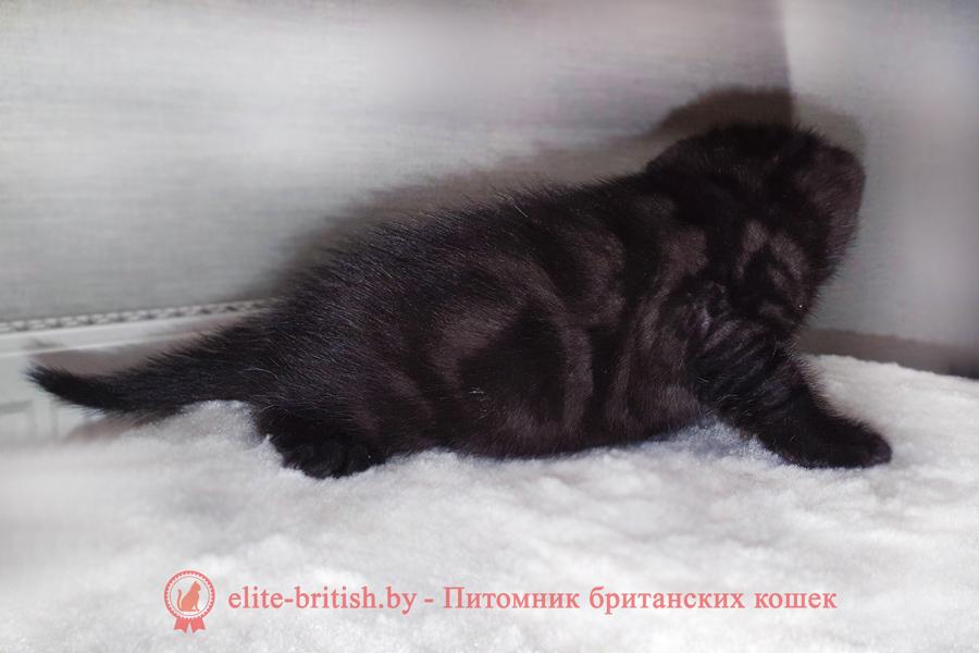британец черный дым, британский кот черный дым, британские котята черный дым, черный дым британская кошка фото, британцы черный дым фото, кошка британская черный дым, британские котята окрас черный дым, британские котята черный дым фото, британец черный фото, черные британцы фото, черный британский кот фото, черные британские коты фото, черная британская кошка, черная британская кошка фото, черный британский кот, черные британские коты, британский черный котенок, черные британские котята, кот британец черный фото, черные коты британцы фото, черный британец, британцы черные, британские котята черного окраса, черный британец котенок, котята британцы черные, фото черного британского котенка, черные британские котята фото, британцы коты черные, черный британец кот, британец черный мрамор на серебре, британские коты черного окраса фото, британец черного цвета, черная кошка британец, кот британец черно белый, британец черного цвета, британские кошки окрас черный, британцы черный окрас, британские кошки