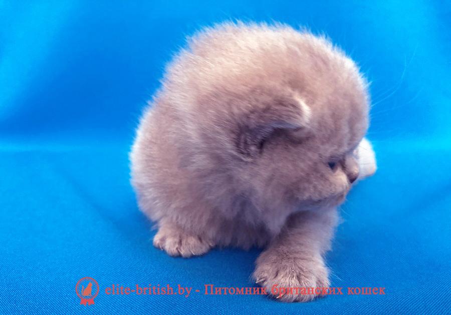 лиловый британец, британец лиловый фото, фото лиловых британцев, британский лиловый котенок, британские коты лилового окраса фото, фото лиловых британских котят, британские котята фото лиловые, британская кошка фото лиловая, фото лиловой британской кошки, британские котята лилового окраса фото, лиловая британская кошка, британский лиловый кот фото, британские котята лилового окраса, лиловый окрас британских кошек фото, лиловый британский кот, кот британец лиловый фото, лиловый окрас британских кошек, британцы лилового окраса, британец лилового цвета, британец лилового окраса фото, лиловые британцы вислоухие фото, британская короткошерстная кошка лиловая, лиловый цвет британских кошек, британская лиловая кошка характер, британские котята лилового цвета, британские вислоухие котята фото лиловые, котята британцы лиловые фото, британский кот лилового окраса, британский вислоухий кот лиловый, британские котята лиловые купить, британские лиловые котята цена, купить лилового британца, лиловые британцы котята, британцы коты лиловые