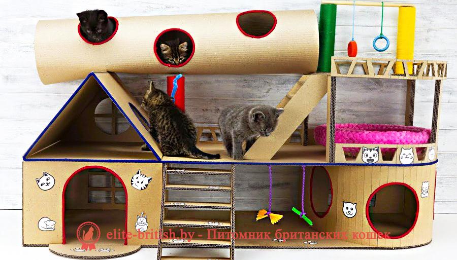 домик для кошки из картонасвоими руками, домик для кошки из фанеры, дом для кошки своими руками из фанеры, родильный домик для кошки, дом для кошки из фанеры, домик для кошки из фанеры чертежи, домики для кошек из фанеры купить, домик для кошки из фанеры и ковролина, фанерные домики для кошек, домик для кошки из фанеры лазерная резка, родильный домик для кошки купить в москве, как сделать домик для кошек из фанеры, родильный дом для кошки, родильный домик для кошки купить, сборный домик из фанеры для кошки, родилка для кошек чертеж, родильный дом для кошки купить, родильный домик для кошки своими руками, домики из фанеры для кошек новосибирск, фанерные дома для кошек новосибирск, дом для кошек чертежи из фанеры, модульные домики для кошек из фанеры купить, складной домик конструктор для кошек из фанеры, размеры домика для кошек из фанеры, родильное место для кошки, модульные домики для кошек из фанеры, домики для кошек с когтеточкой фанера, родильные домики для кошек из фанеры, родильные домики для кошек из фанеры, родильная коробка для кошки, домики для кошек из фанеры фото