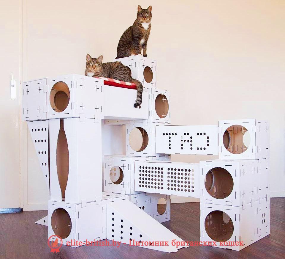 КОМПЛЕКСЫ С РОДИЛЬНЫМИ ДОМИКАМИ ДЛЯ КОШЕК, домик для кошки из фанеры своими руками, домик для кошки из фанеры, дом для кошки своими руками из фанеры, родильный домик для кошки, дом для кошки из фанеры, домик для кошки из фанеры чертежи, домики для кошек из фанеры купить, домик для кошки из фанеры и ковролина, фанерные домики для кошек, домик для кошки из фанеры лазерная резка, родильный домик для кошки купить в москве, как сделать домик для кошек из фанеры, родильный дом для кошки, родильный домик для кошки купить, сборный домик из фанеры для кошки, родилка для кошек чертеж, родильный дом для кошки купить, родильный домик для кошки своими руками, домики из фанеры для кошек новосибирск, фанерные дома для кошек новосибирск, дом для кошек чертежи из фанеры, модульные домики для кошек из фанеры купить, складной домик конструктор для кошек из фанеры, размеры домика для кошек из фанеры, родильное место для кошки, модульные домики для кошек из фанеры, домики для кошек с когтеточкой фанера, родильные домики для кошек из фанеры, родильные домики для кошек из фанеры, родильная коробка для кошки, домики для кошек из фанеры фото