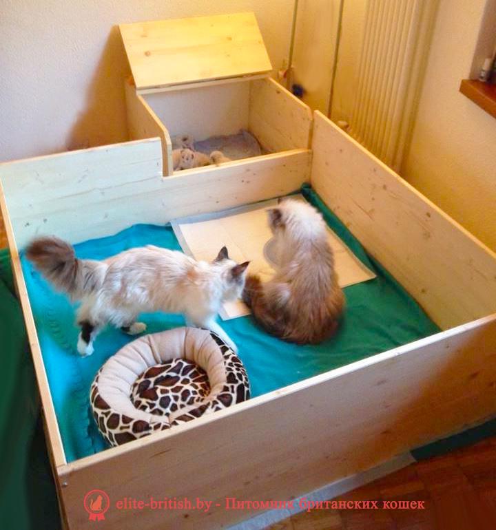 манеж для котят, домик для кошки из фанеры своими руками, домик для кошки из фанеры, дом для кошки своими руками из фанеры, родильный домик для кошки, дом для кошки из фанеры, домик для кошки из фанеры чертежи, домики для кошек из фанеры купить, домик для кошки из фанеры и ковролина, фанерные домики для кошек, домик для кошки из фанеры лазерная резка, родильный домик для кошки купить в москве, как сделать домик для кошек из фанеры, родильный дом для кошки, родильный домик для кошки купить, сборный домик из фанеры для кошки, родилка для кошек чертеж, родильный дом для кошки купить, родильный домик для кошки своими руками, домики из фанеры для кошек новосибирск, фанерные дома для кошек новосибирск, дом для кошек чертежи из фанеры, модульные домики для кошек из фанеры купить, складной домик конструктор для кошек из фанеры, размеры домика для кошек из фанеры, родильное место для кошки, модульные домики для кошек из фанеры, домики для кошек с когтеточкой фанера, родильные домики для кошек из фанеры, родильные домики для кошек из фанеры, родильная коробка для кошки, домики для кошек из фанеры фото