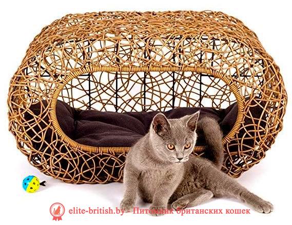 плетеный домик для кошек, домик для кошки из фанеры своими руками, домик для кошки из фанеры, дом для кошки своими руками из фанеры, родильный домик для кошки, дом для кошки из фанеры, домик для кошки из фанеры чертежи, домики для кошек из фанеры купить, домик для кошки из фанеры и ковролина, фанерные домики для кошек, домик для кошки из фанеры лазерная резка, родильный домик для кошки купить в москве, как сделать домик для кошек из фанеры, родильный дом для кошки, родильный домик для кошки купить, сборный домик из фанеры для кошки, родилка для кошек чертеж, родильный дом для кошки купить, родильный домик для кошки своими руками, домики из фанеры для кошек новосибирск, фанерные дома для кошек новосибирск, дом для кошек чертежи из фанеры, модульные домики для кошек из фанеры купить, складной домик конструктор для кошек из фанеры, размеры домика для кошек из фанеры, родильное место для кошки, модульные домики для кошек из фанеры, домики для кошек с когтеточкой фанера, родильные домики для кошек из фанеры, родильные домики для кошек из фанеры, родильная коробка для кошки, домики для кошек из фанеры фото