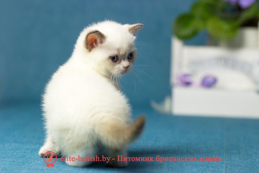 британский кот поинт биколор, британец колор поинт с белым, британская кошка поинт колор биколор, ританский кот поинт с белым, британские котята поинт биколор, британские котята блю поинт биколор, британские котята колор поинт с белым, блю поинт британецбиколор, британцы лилак поинт биколор, британец поинт с белым, британские котята сил поинт биколор, британские кошки блю поинт биколор, британские котята окраса блю поинт с белым , британец блю поинт фото, британец колор поинт фото, британская кошка колор поинт фото, блю пойнт британские кошки, британские кошки колор пойнт, блю пойнт британские котята, блю пойнт британцы, колор пойнт британец, кот британский колор пойнт, британские котята колор пойнт, биколор британская кошка, кот британский биколор, британский котенок биколор, голубой биколор британец, биколор британец, британские котята биколор фото, британцы биколор фото