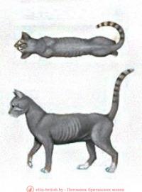 стадии нормы, истощения и ожирения для кота