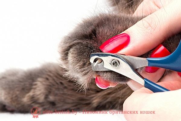 как правильно стричь когти котенку и кошке. Когтетерезы