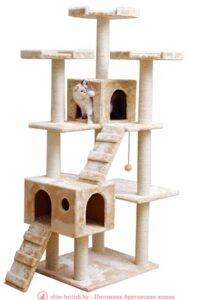 Когтеточка для котенка. Комплекс. Котенок в новом доме