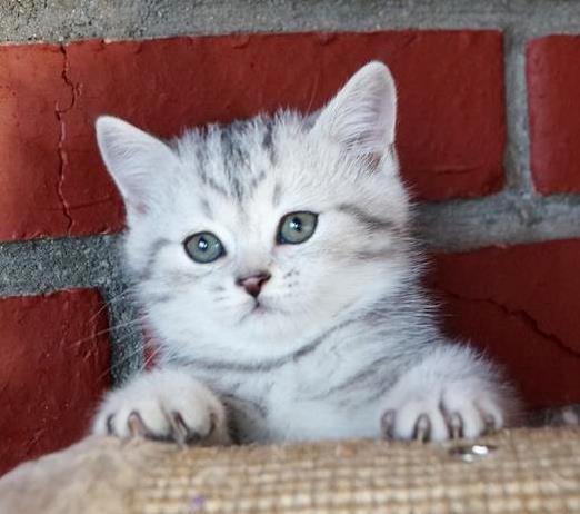 Своими руками домик для котят