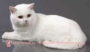 фото британец белый