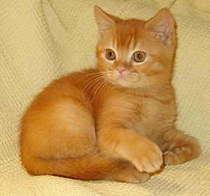 фото котят рыжих